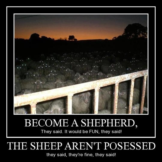 Become a shepherd…