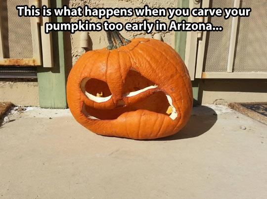 funny-pumpkin-rotten-Arizona