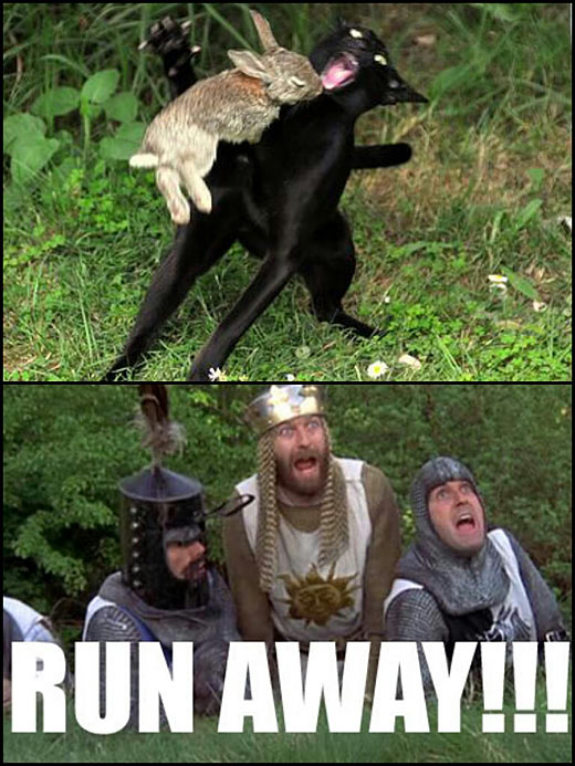 funny-rabbit-bite-cat