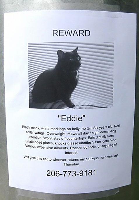 funny-reward-cat-search-black