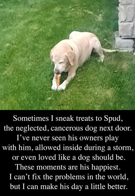 The neglected dog next door…