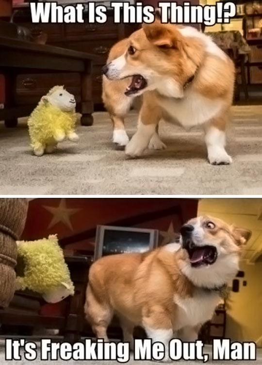 The attack of the stuffed sheep…