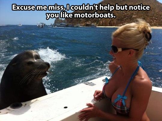 Friendly seal…