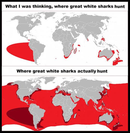 Where great white sharks hunt…