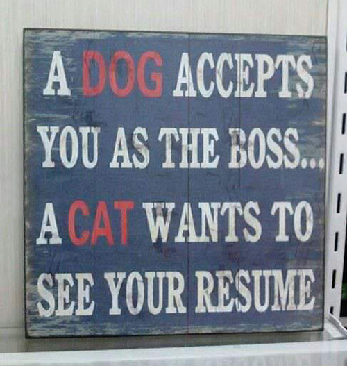What makes dogs and cats so different…