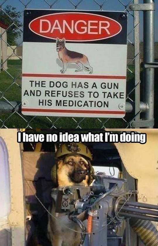 Beware of the armed dog…