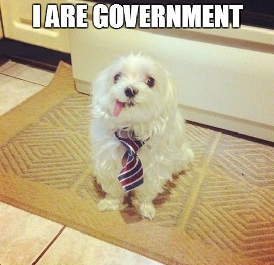 funny-silly-dog-tie-government