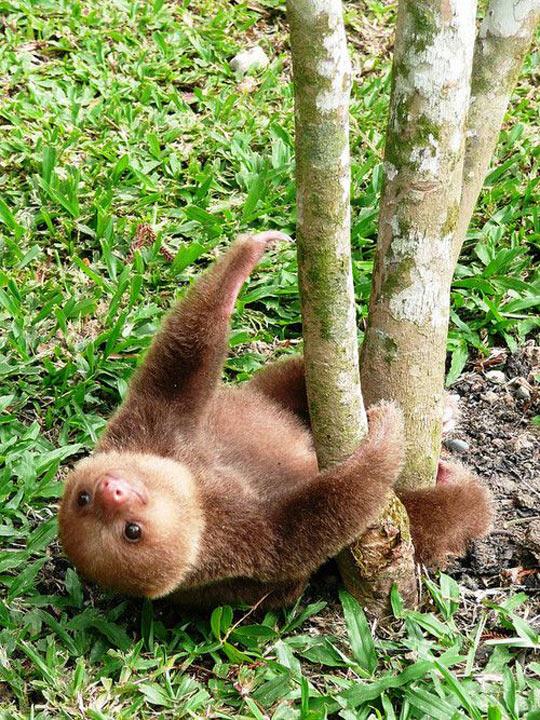 funny-sloth-tree-grass