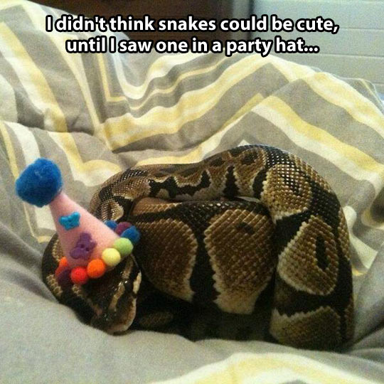 You thought snakes couldn't be cute?