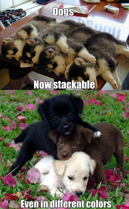 funny-stackable-puppies-different-colors