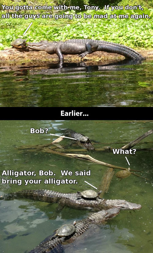 Alligator party…