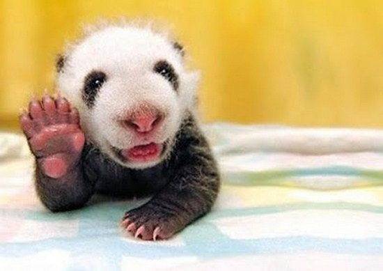 13 Pics of Cute Animals Saying Hi to You Will Melt Your Heart- 1