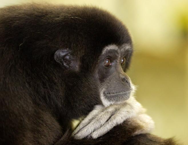 20 Pics Of Cute Animals 2