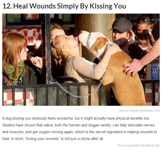 20 Reasons Why Getting a Dog Can Change Your Life 12