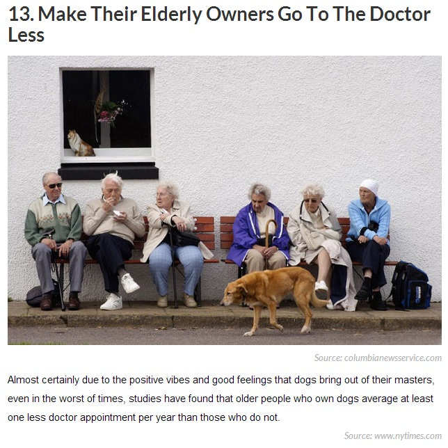 20 Reasons Why Getting a Dog Can Change Your Life 13