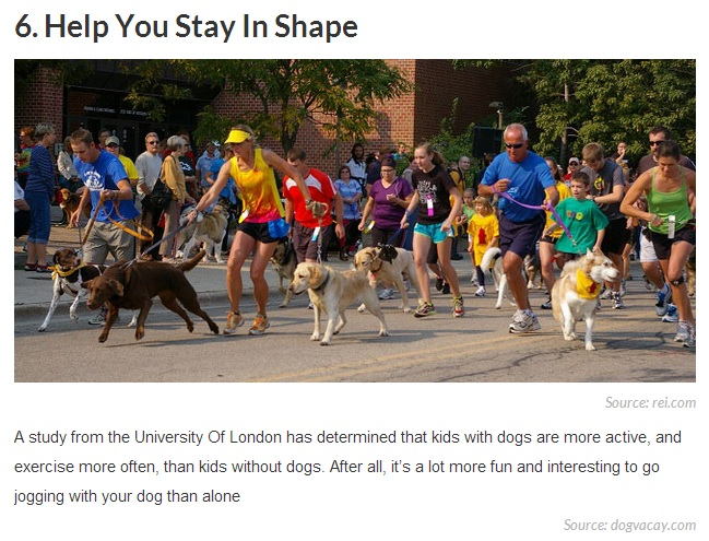 20 Reasons Why Getting a Dog Can Change Your Life 6