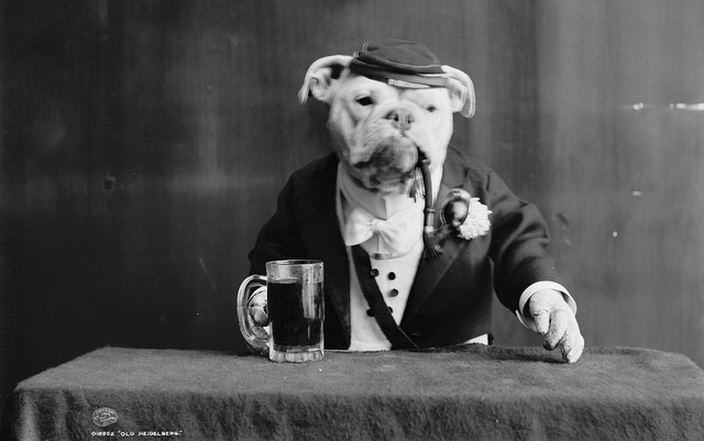 28 Old School Photos of Dressed Up Pets12