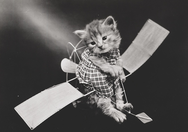28 Old School Photos of Dressed Up Pets14