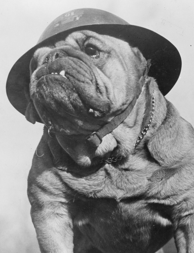 28 Old School Photos of Dressed Up Pets15