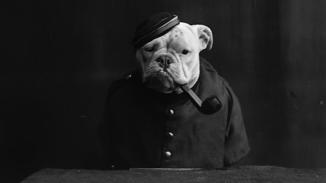 28 Old School Photos of Dressed Up Pets20
