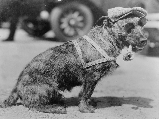 28 Old School Photos of Dressed Up Pets22