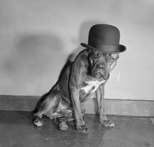 28 Old School Photos of Dressed Up Pets23