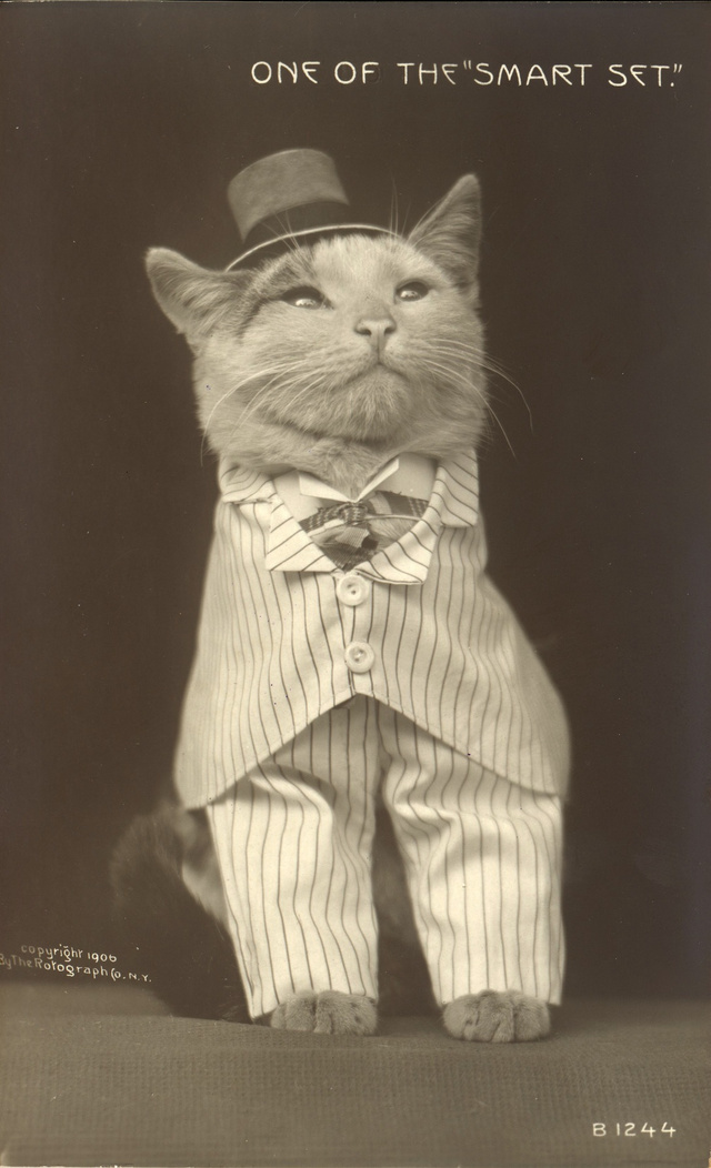 28 Old School Photos of Dressed Up Pets8