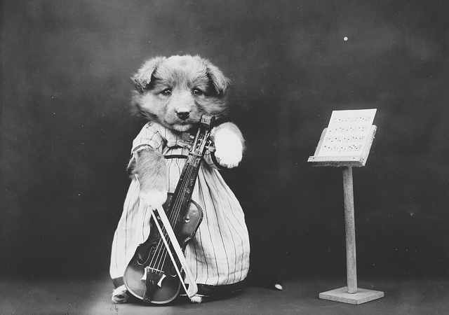 28 Old School Photos of Dressed Up Pets9