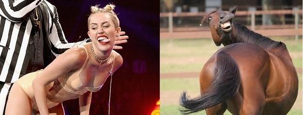 Horses VS Miley Cyrus  Nailed it 3