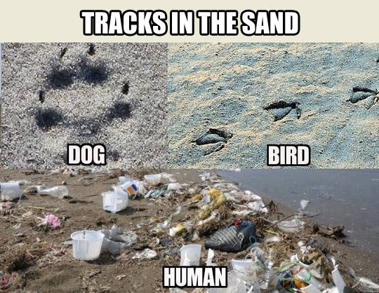 TRACKS IN THE SAND.