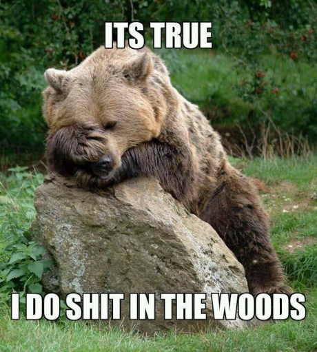 The real confession bear