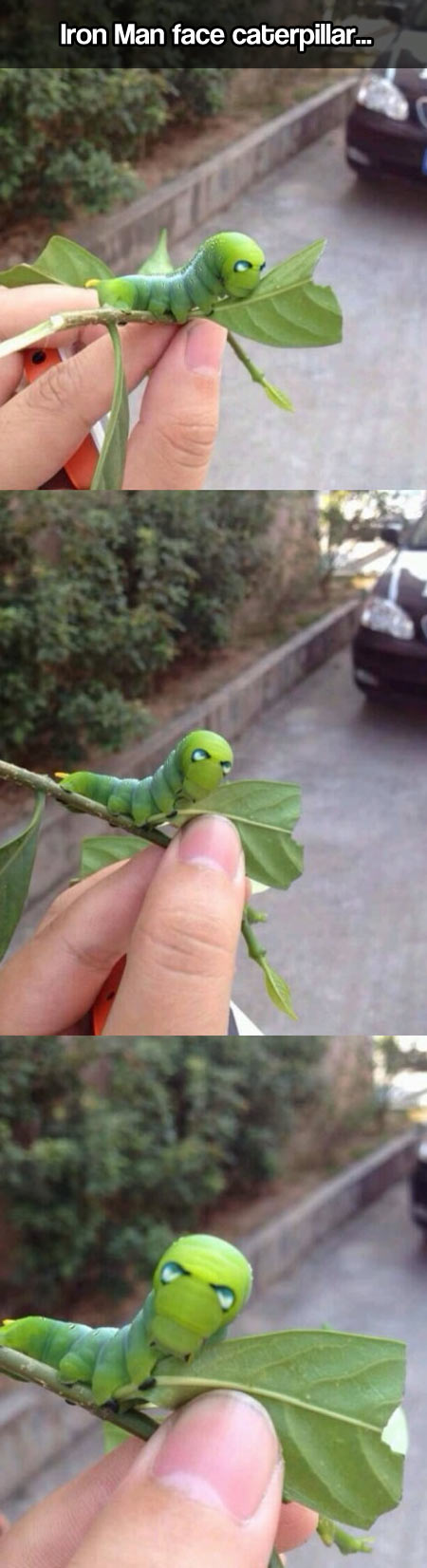 A caterpillar with a very particular face…