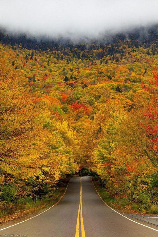 Autumn tree tunnel…