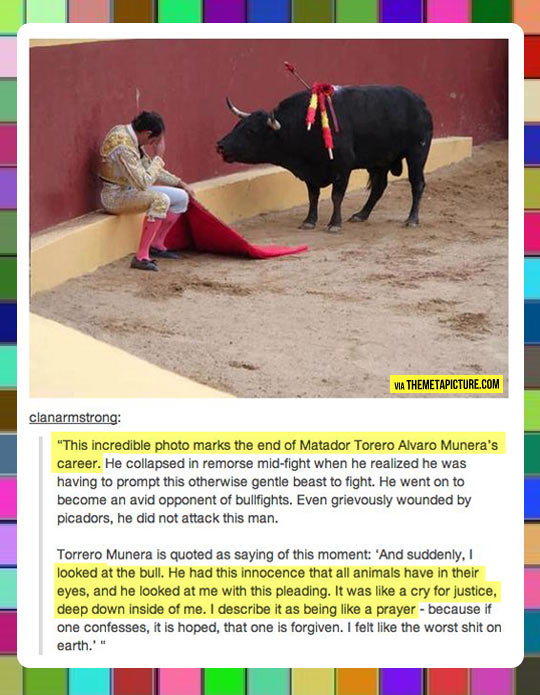 Bullfighter regrets his job choice…