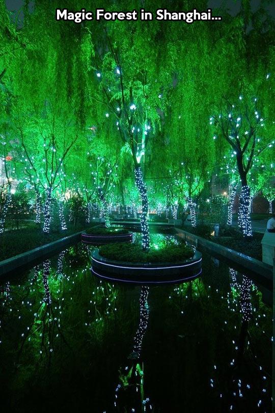 Magic forest…