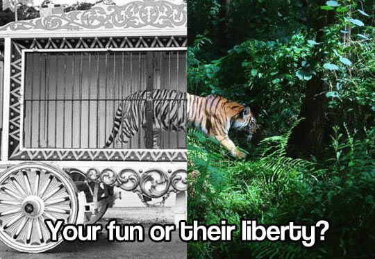 cool-tiger-cage-liberty-jungle