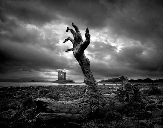 Death of a tree…