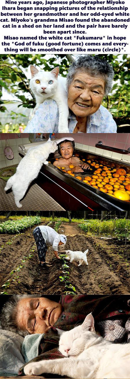 A grandmother and her odd-eyed white cat...