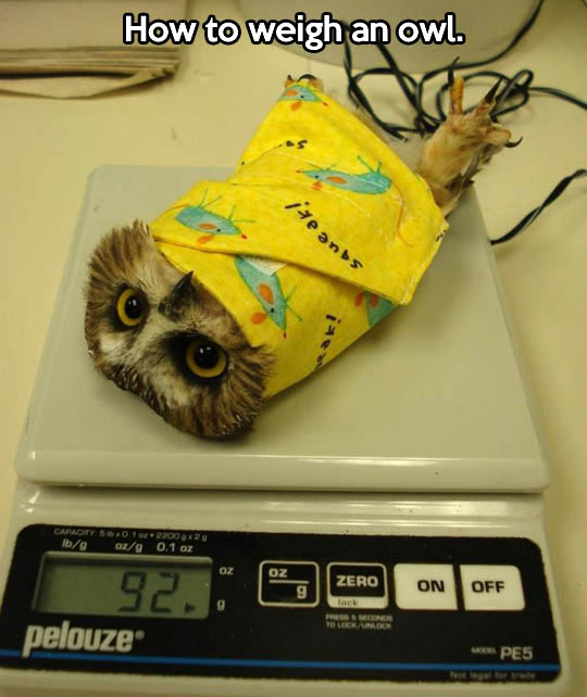 The correct way to weight an owl…