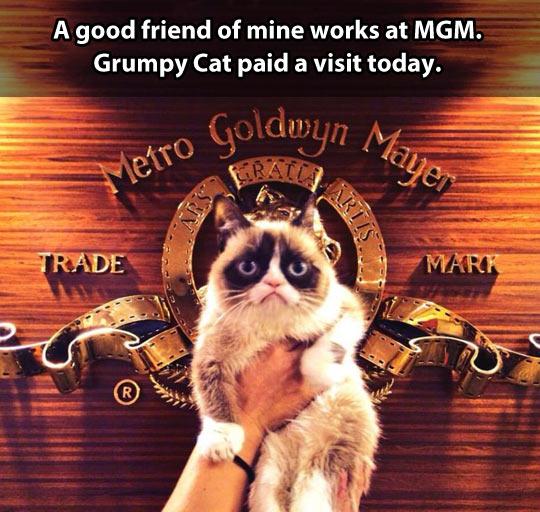 funny-Grumpy-cat-MGM-logo