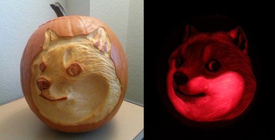 Wow, such pumpkin…