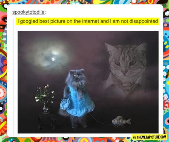 funny-Internet-cat-best-picture-Google