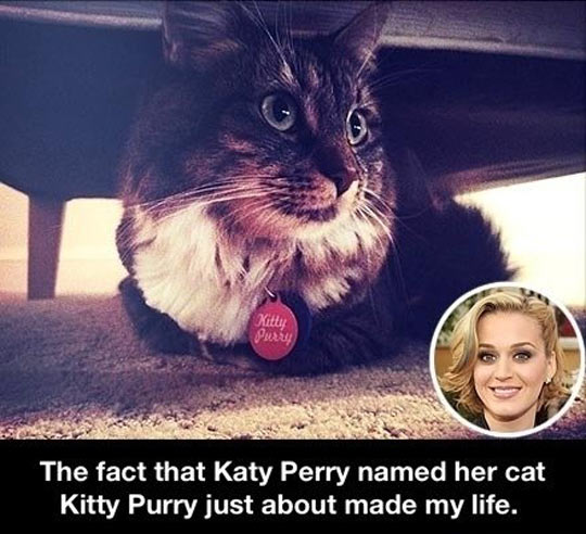 Katy Perry's cat…