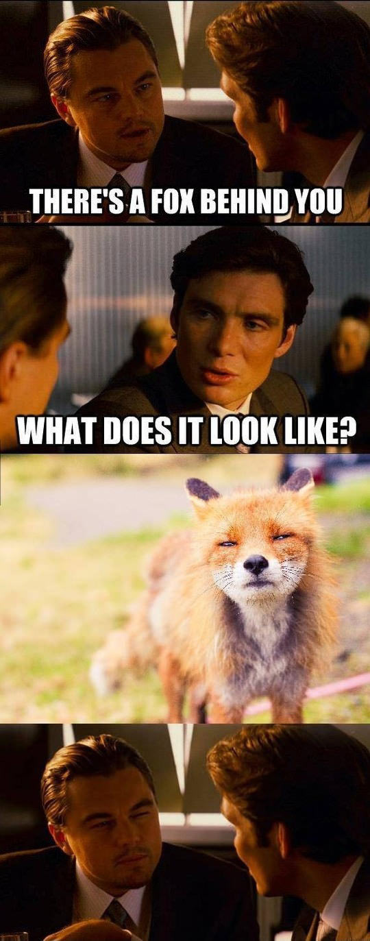 funny-Leonardo-DiCaprio-fox-face