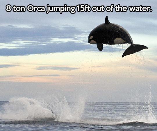 Big jump…