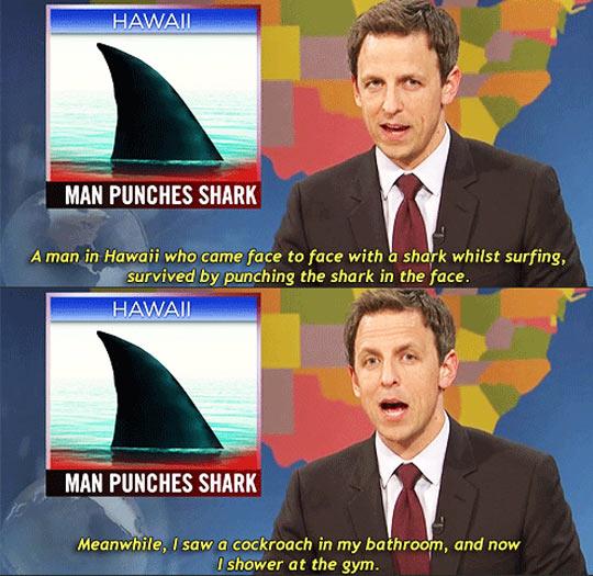 funny-TV-news-Hawaii-shark-cockroach