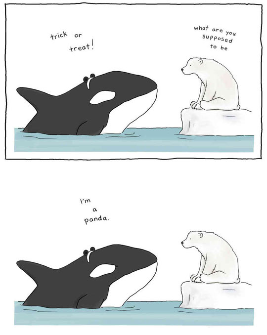 funny-animals-costume-panda-orca