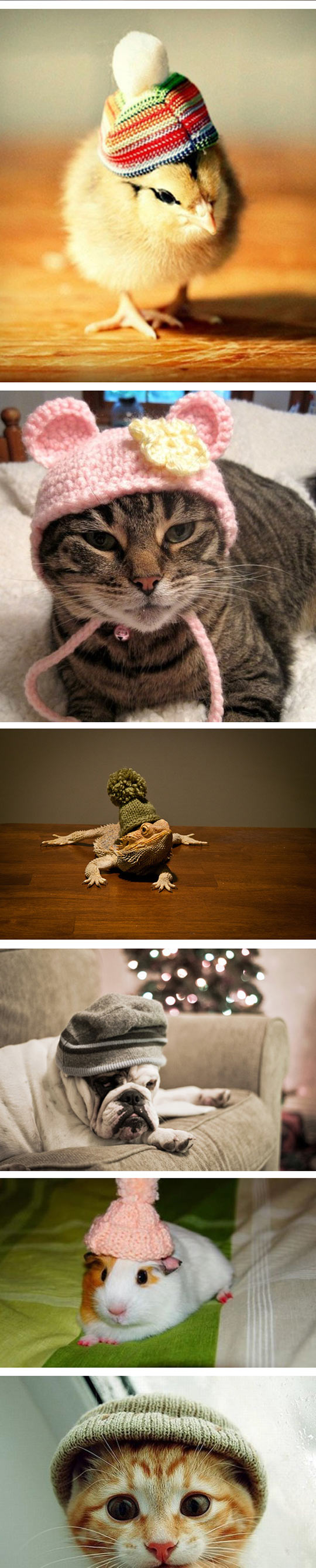 funny-animals-wearing-beanies-compilation-hipster-cat