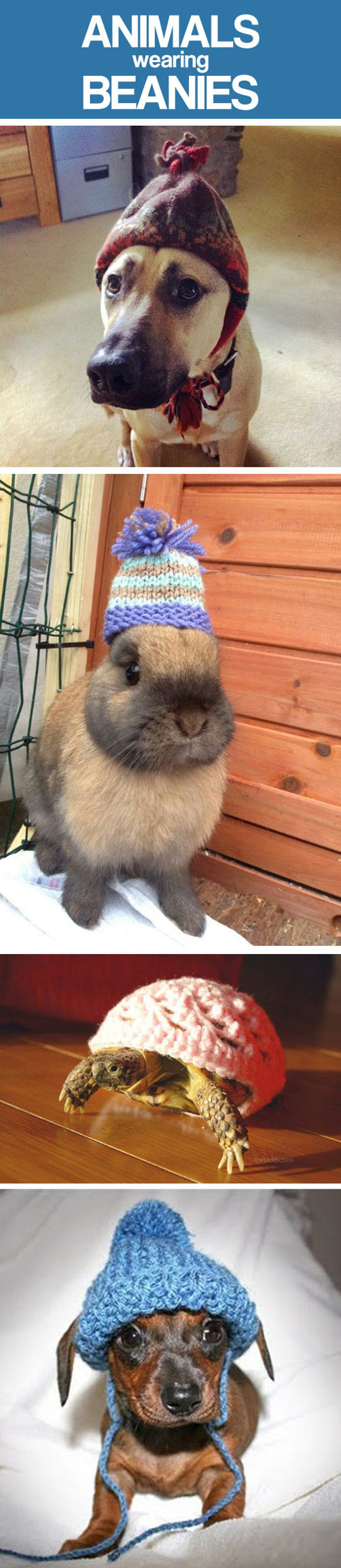 funny-animals-wearing-beanies-compilation