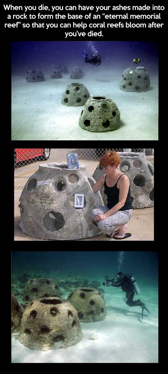 funny-ashes-memorial-reef-life-ocean